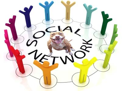 American PitBull Registry - classifieds, kennels, social network and