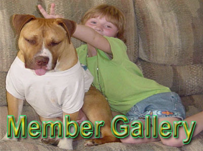 APBR Member PitBull picture gallery